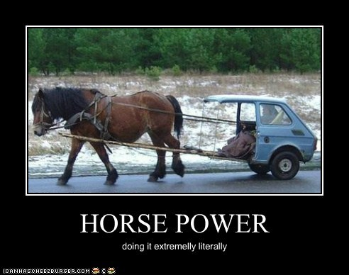 animals horse horsepower literal interpretation - 5454234880