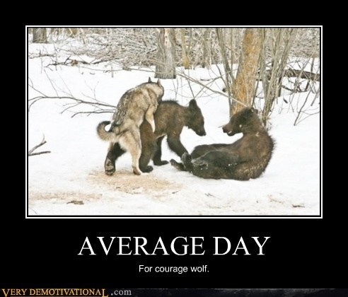 average day bears Courage Wolf Pure Awesome wtf