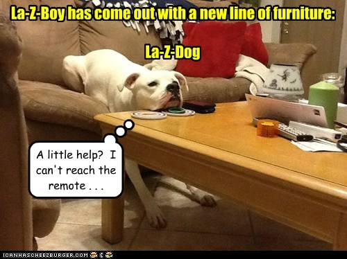 La-Z-Boy has come out with a new line of furniture: La-Z-Dog A little help? I can't reach the remote . . .