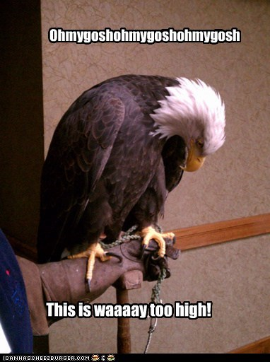 afraid of heights animals bald eagle heights phobia scared - 5455302656