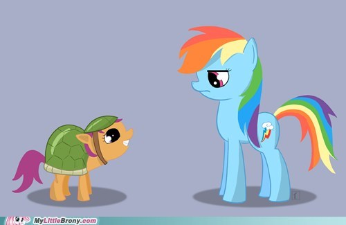 art pet rainbow dash Scootaloo tank tortoise - 5455467008