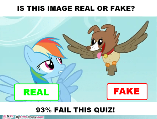 facebook may the best pet win pets ponies ponybook real real or fake - 5455583744