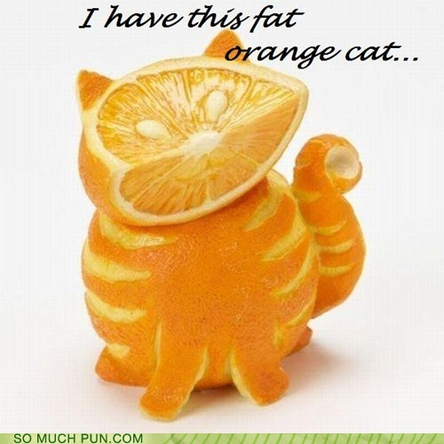 cat,double meaning,fat,Hall of Fame,literalism,orange,oranges,shape,tabby