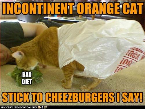 Cheezburger Image 5456128768
