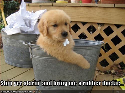 bucket puppy - 545670400