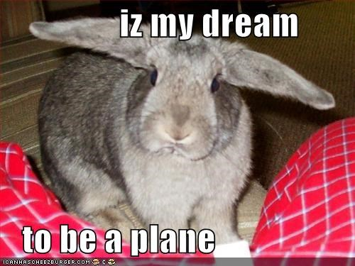 become bunny caption captioned dream ears plane shape - 5457374208
