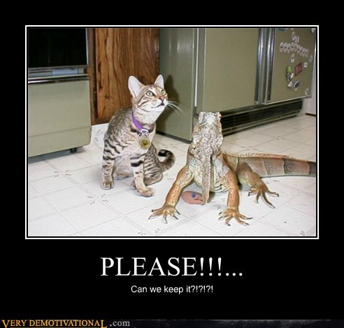 hilarious kitty lizard please