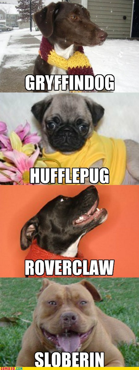 best of week comic dogs dogwarts Harry Potter Hogwarts