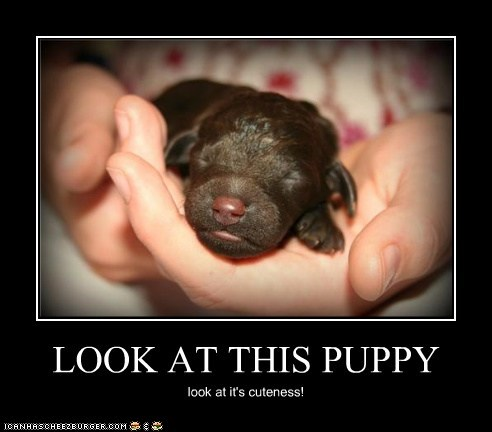 LOOK AT THIS PUPPY look at it's cuteness!