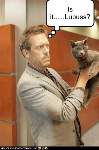 Cats,house-m-d,hugh laurie,its-never-lupus,lolcats,lupus,puns
