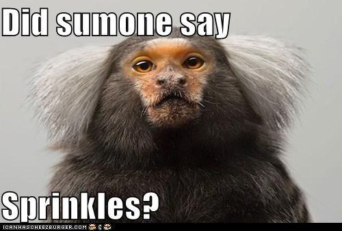 code name gangster name monkey secret sprinkles what monkey - 5458904832
