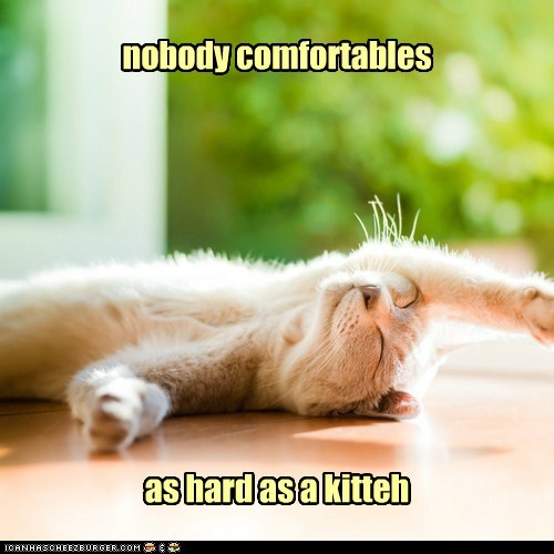 action as caption captioned cat comfortable hard incomparable kitten nobody verb - 5459021056
