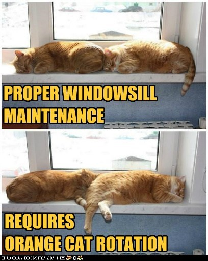 asleep,best of the week,caption,captioned,cat,Cats,Hall of Fame,maintenance,orange,proper,requires,rotation,sill,sleeping,tabbies,tabby,window,windowsill