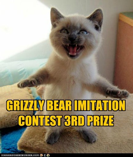 3rd bear caption captioned cat contest grizzy bear imitation kitten prize siamese - 5459998976