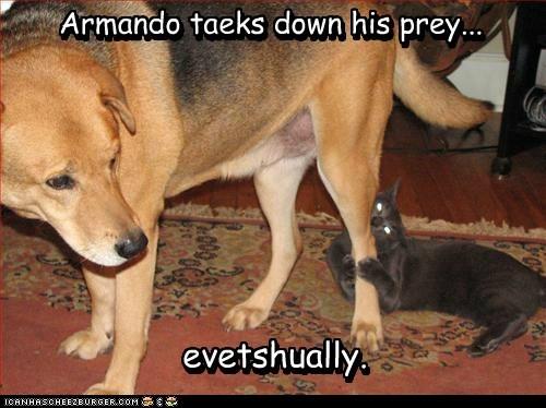 Armando taeks down his prey... evetshually. evetshually. Armando taeks down his prey...