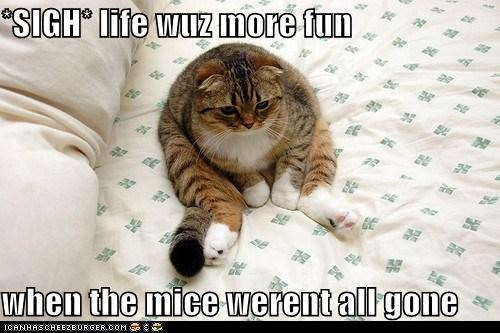 *SIGH* life wuz more fun  when the mice werent all gone