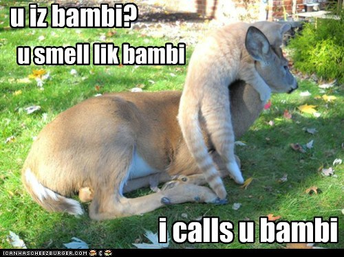 bambi caption captioned cat deer friends friendship tabby - 5460285696