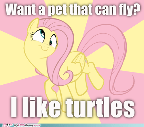 fluttershy i like turtles may the best pet win meme pets - 5460396288