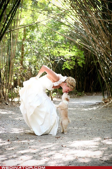 bride,dogs,funny wedding photos,KISS