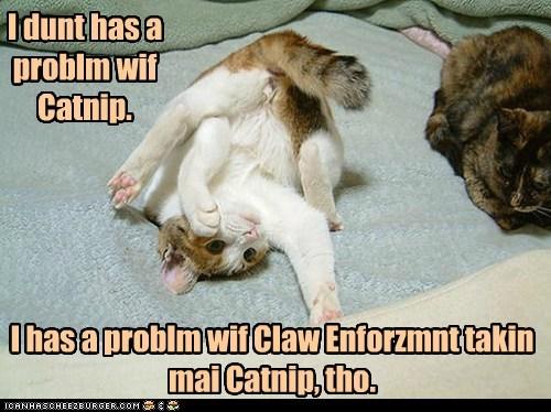 I dunt has a problm wif Catnip. I has a problm wif Claw Enforzmnt takin mai Catnip, tho.