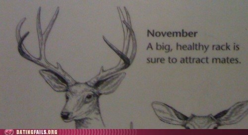 antlers,biology,book,breasts,deer,rack,We Are Dating