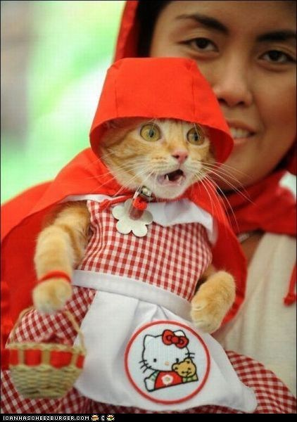 costume,cyoot kitteh of teh day,dressed up,expressions,Little Red Riding Hood,omg