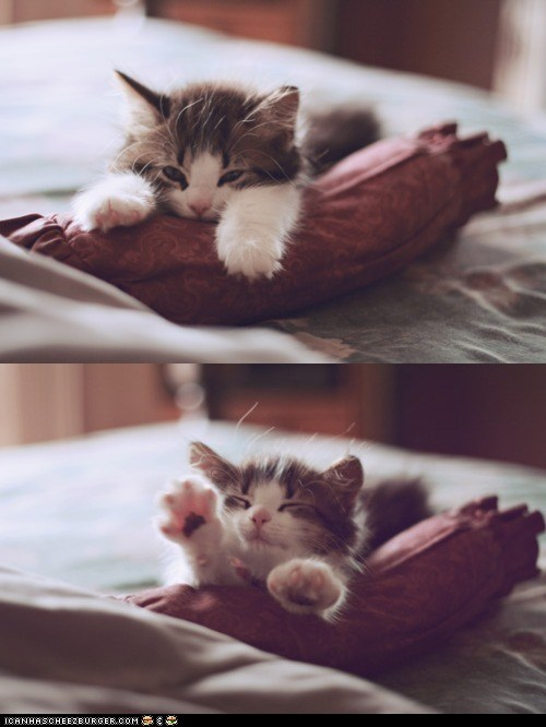 cyoot kitteh of teh day,kitten,multipanel,pillows,stretching,swimming,tired