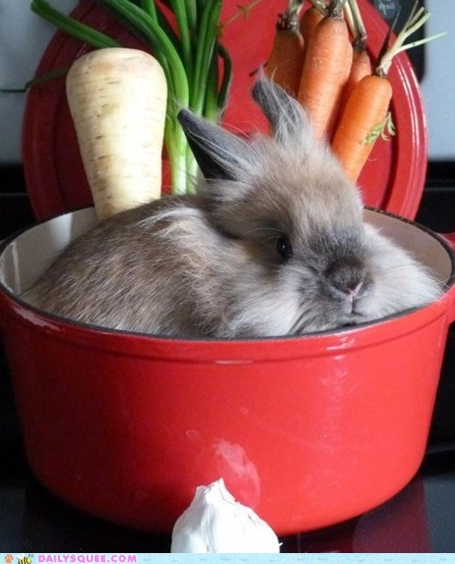 bunny,crock pot,do want,Hall of Fame,happy bunday,pot,rabbit,reader squees,sitting,stew,tasting,testing