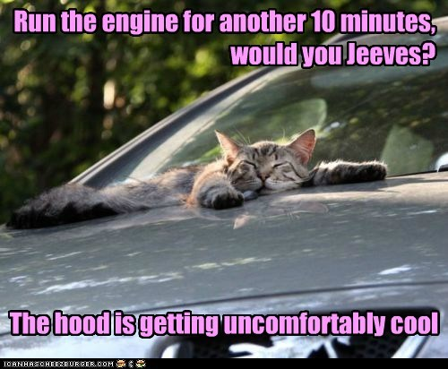 10 another caption captioned car cat cool engine hood minutes request run sleeping uncomfortable uncomfortably