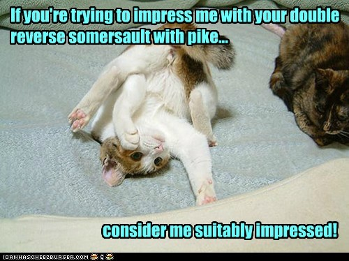 are caption captioned cat consider double good job if impress impressed me pike reverse somersault trying upside down you