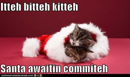 asleep,awaiting,caption,captioned,cat,Cats,christmas,hat,itteh bitteh kitteh committeh,kitten,santa,sleeping,waiting
