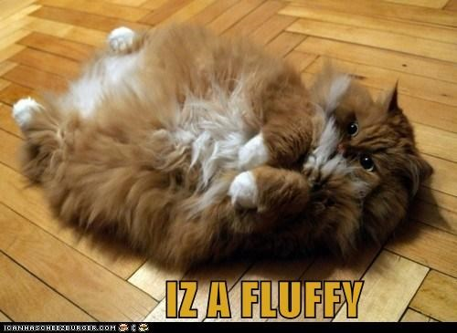 am caption captioned cat derp Fluffy I lolwut - 5462078720