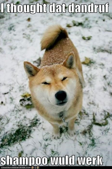 dandruff,outdoors,shampoo,shiba inu,snow,snowing