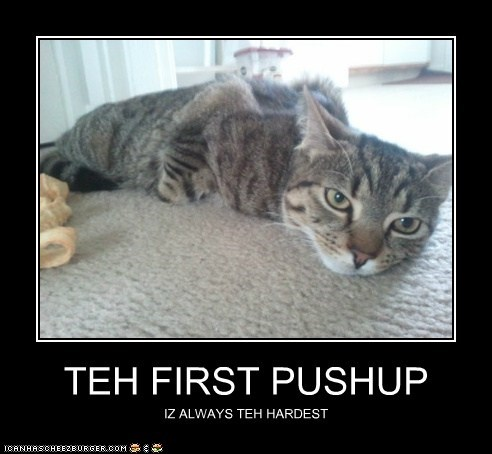 always caption captioned cat do not want exercise first hardest lazy pushup working out