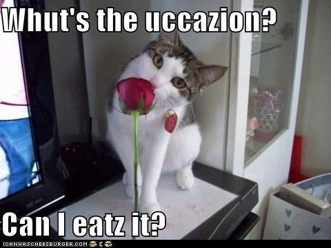 caption captioned cat do want Flower nomming noms occasion question rose what - 5462456576