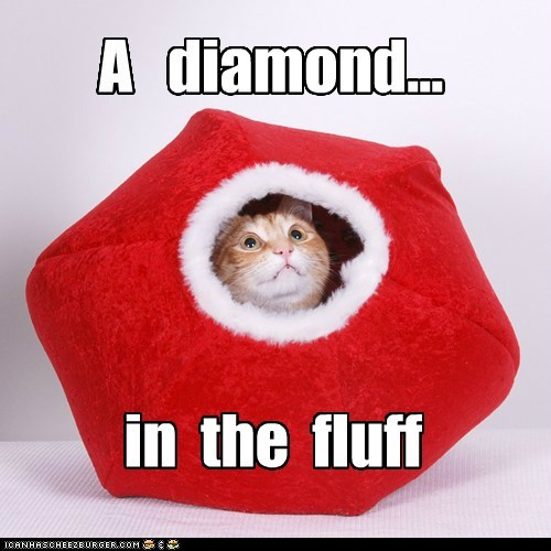 caption,captioned,cat,diamond,fluff,in,peeking,pun,rhyme,rough,shape