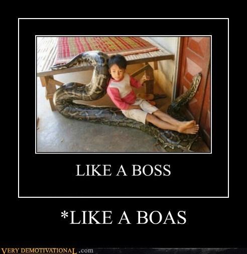 boa boss kid Pure Awesome - 5462844160