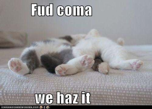 best of the week caption captioned cat Cats coma food Hall of Fame i has noms sleeping thanksgiving we - 5463390976