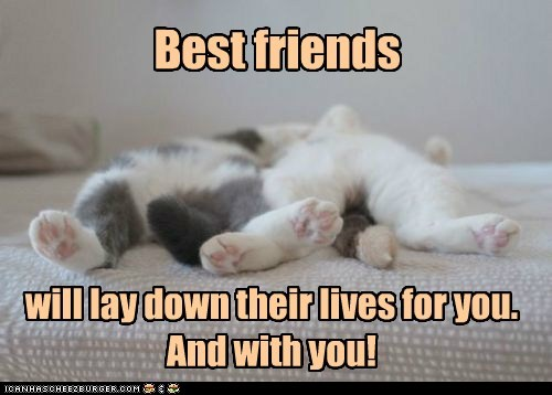 Best friends will lay down their lives for you. And with you!