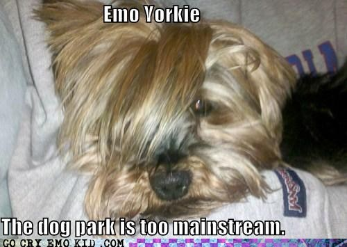 animals,bark,dog park,dogs,emo,emolulz
