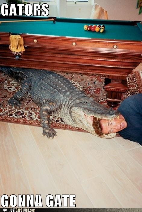 alligator,Arnold Scwharzenegger,bite,caption contest