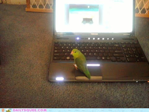 adorable computer lolwut parrot random reader squees reference squee the shining - 5464269824