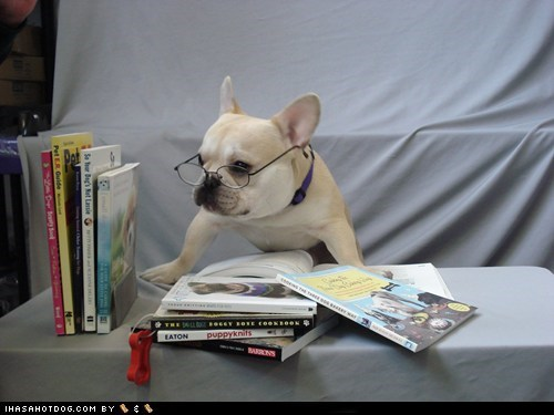 books,french bulldogs,glasses,goggie ob teh week,smart,smarty pants
