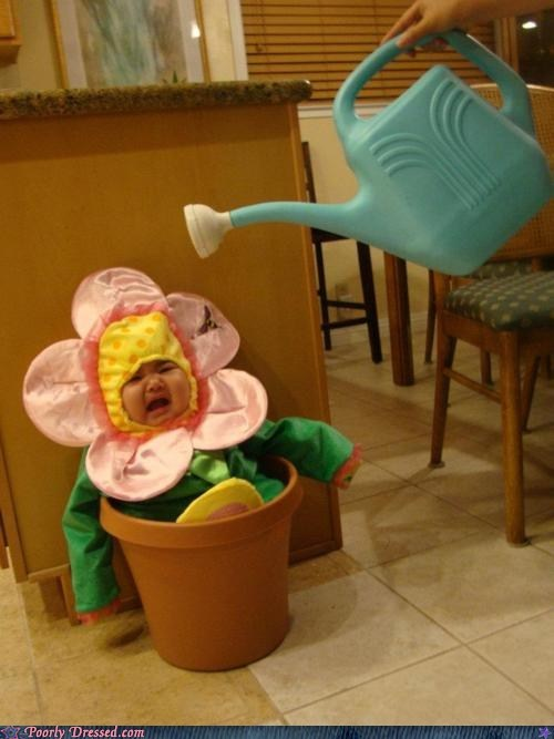 Babies baby flower Hall of Fame parenting watering the baby - 5464782080