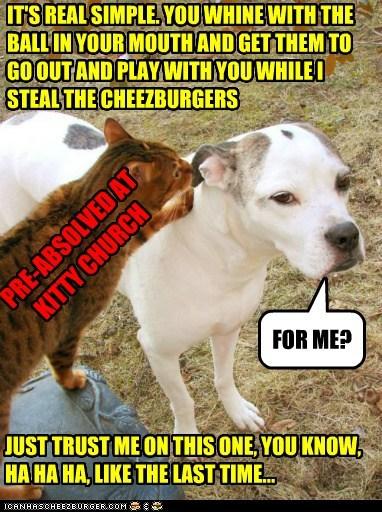Cheezburger Image 5464940800