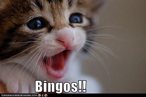 bingo bingo game cat I Can Has Cheezburger i win winner - 5465023744