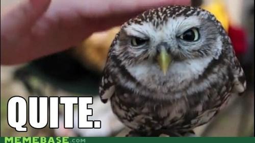 adorable animals Memes Owl quite - 5465121536