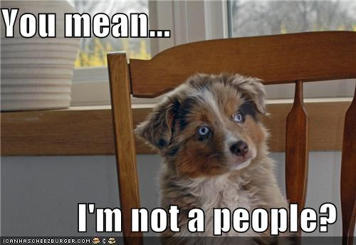 are you sure australian shepherd confused i dont believe you puppy what do you mean - 5465353728