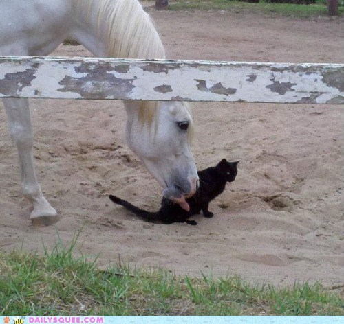 cat cowlick do not want friends friendship gross horse Interspecies Love lick licking - 5465464576