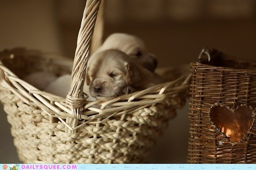 Babies baby basket best ever full puppies puppy squee - 5465597440